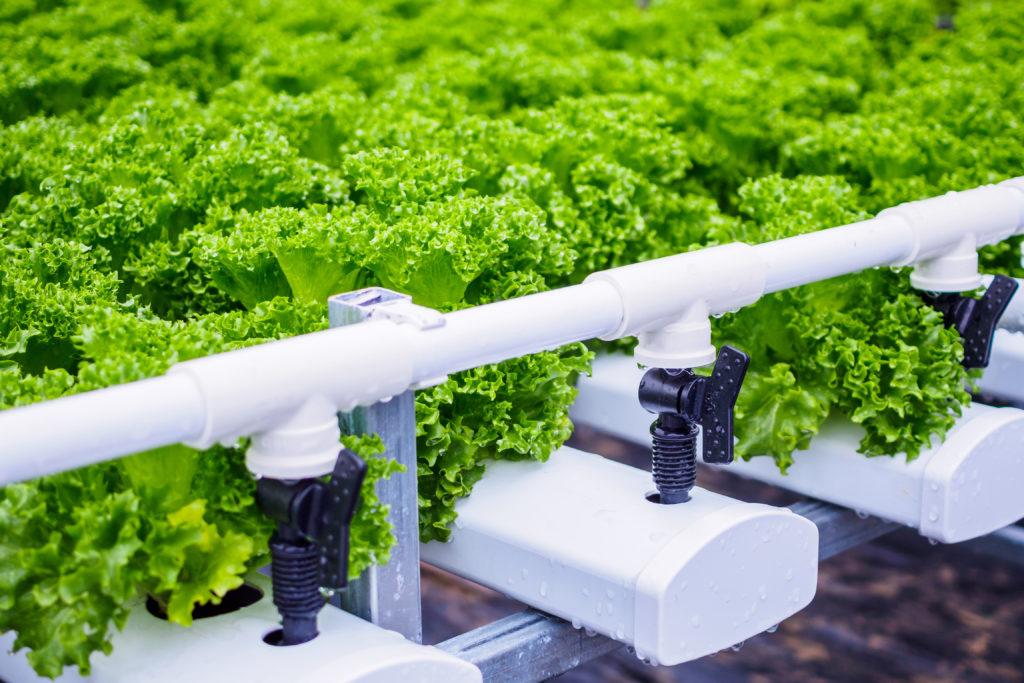 גידול צמחים ביתי